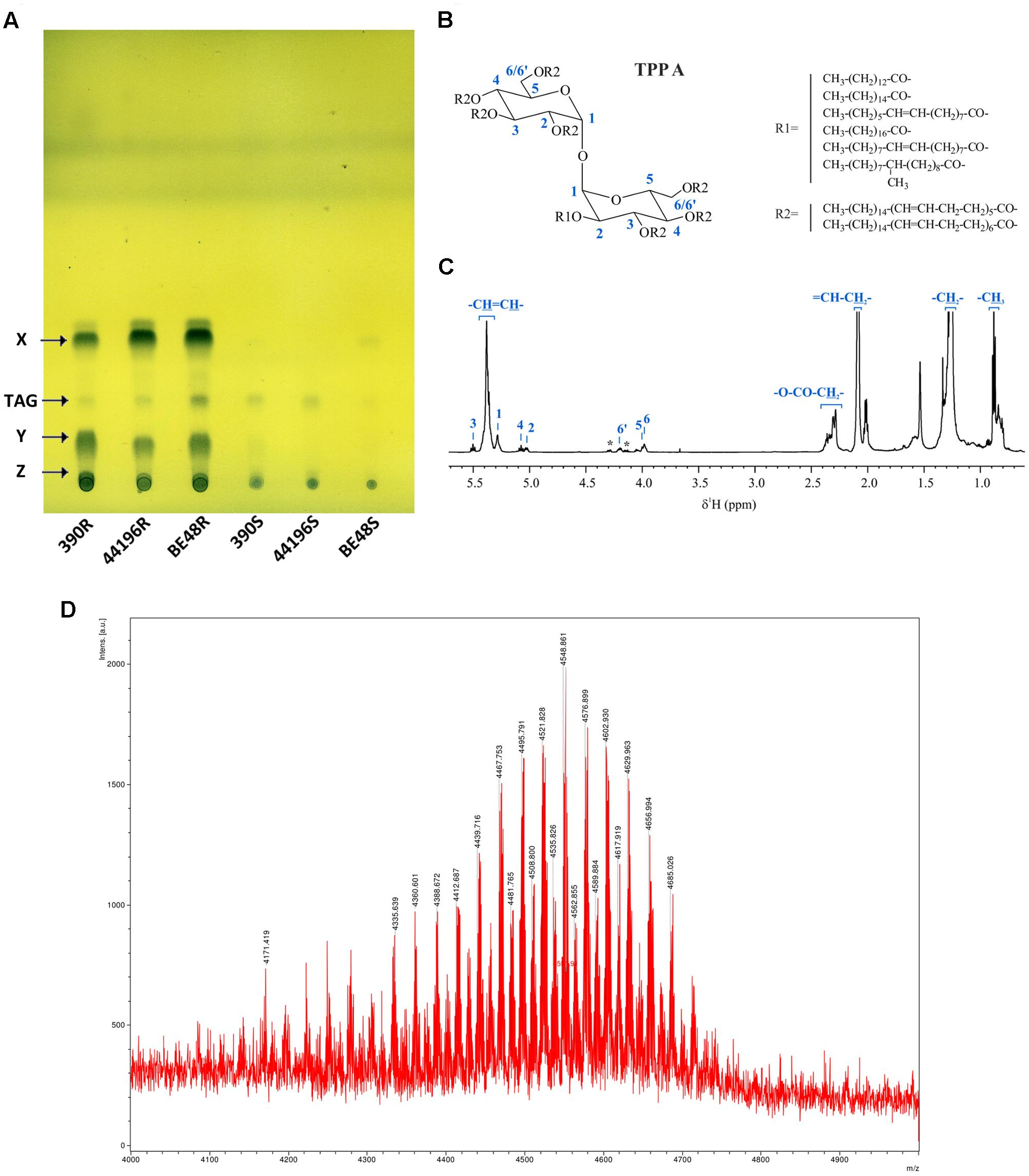 NMR identification of monstrous mycobacterial lipids in cell wall of Mycobacterium abcessus
